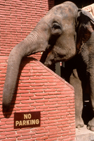 Elephant resting Agra India
